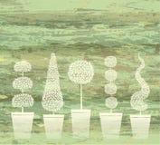 πράσινος topiary διανυσματική απεικόνιση