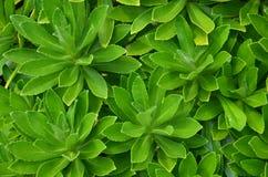 Πράσινο άγριο δέντρο στο θερινό χρόνο Στοκ Φωτογραφίες