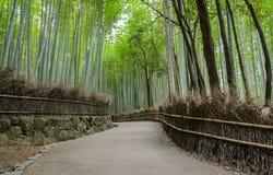Πράσινο άλσος μπαμπού σε Arashiyama στο Κιότο, Ιαπωνία Στοκ φωτογραφία με δικαίωμα ελεύθερης χρήσης