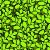Πράσινο άνευ ραφής πρότυπο Στοκ εικόνα με δικαίωμα ελεύθερης χρήσης