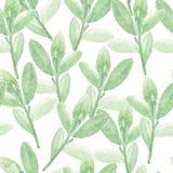 Πράσινο άνευ ραφής σχέδιο watercolor κλάδων Στοκ Εικόνες