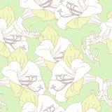 Πράσινο άνευ ραφής σχέδιο με τα άσπρα amaryllises Στοκ Φωτογραφίες