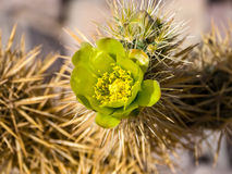 Πράσινο άνθος στοκ εικόνες με δικαίωμα ελεύθερης χρήσης