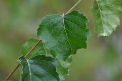 Πράσινο δάσος άνοιξη στις ακτίνες ήλιων Στοκ Εικόνα