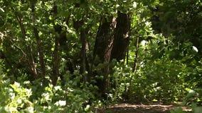 Πράσινο δάσος αλσυλλίων φιλμ μικρού μήκους