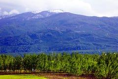 Πράσινο δάσος κάτω από το χιονώδες βουνό Στοκ Εικόνα