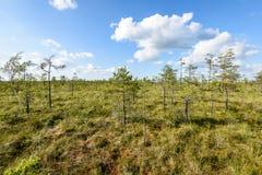 πράσινο δάσος με τους κορμούς δέντρων το καλοκαίρι Στοκ Φωτογραφία