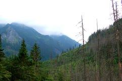 Πράσινο δάσος στην άκρη των ευγενών λόφων στοκ εικόνες