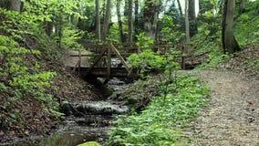 Πράσινο δάσος στην Ελβετία Μια μικρή γέφυρα στα ελβετικά ξύλα πέρα από τον ποταμό Η μετακίνηση καμερών μπροστινή φέρνει στο προσκ απόθεμα βίντεο
