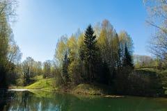 Πράσινο δάσος τοπίων Στοκ Φωτογραφίες