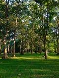 Πράσινο δάσος Στοκ Εικόνα