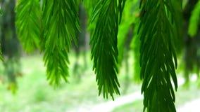 Πράσινο δάσος Στοκ εικόνες με δικαίωμα ελεύθερης χρήσης