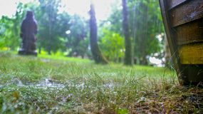 Πράσινο δέντρο βροχής στοκ φωτογραφία με δικαίωμα ελεύθερης χρήσης