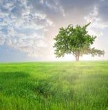 Πράσινο δέντρο μεταξύ πεδία Στοκ εικόνα με δικαίωμα ελεύθερης χρήσης