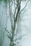 Πράσινο δέντρο με την ομίχλη στο καυτό ελατήριο Στοκ φωτογραφία με δικαίωμα ελεύθερης χρήσης