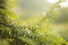 Πράσινο δέντρο με τις πτώσεις δροσιάς στοκ εικόνες με δικαίωμα ελεύθερης χρήσης