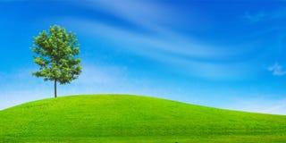 πράσινο δέντρο πεδίων Στοκ φωτογραφία με δικαίωμα ελεύθερης χρήσης