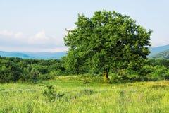 πράσινο δέντρο πεδίων Στοκ εικόνες με δικαίωμα ελεύθερης χρήσης