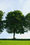 Πράσινο δέντρο σε ένα πράσινο λιβάδι Στοκ εικόνες με δικαίωμα ελεύθερης χρήσης