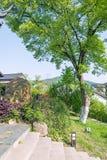 πράσινο δέντρο σπιτιών Στοκ φωτογραφίες με δικαίωμα ελεύθερης χρήσης