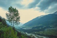 Πράσινο δέντρο στα γκρίζα σύννεφα ενός υποβάθρου που σέρνονται μέσω της κοιλάδας Kullu Στοκ εικόνες με δικαίωμα ελεύθερης χρήσης
