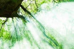 Πράσινο δέντρο στον ήλιο Στοκ εικόνες με δικαίωμα ελεύθερης χρήσης