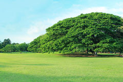 Πράσινο δέντρο στον τροπικό κήπο στοκ φωτογραφίες με δικαίωμα ελεύθερης χρήσης