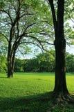 Πράσινο δέντρο στον τροπικό κήπο στοκ εικόνες με δικαίωμα ελεύθερης χρήσης