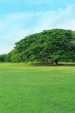 Πράσινο δέντρο στον τροπικό κήπο στοκ φωτογραφίες