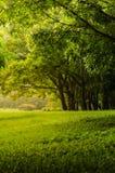 Πράσινο δέντρο στο πάρκο με τον πράσινο χορτοτάπητα Στοκ φωτογραφίες με δικαίωμα ελεύθερης χρήσης