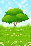 πράσινο δέντρο τοπίων Στοκ εικόνες με δικαίωμα ελεύθερης χρήσης