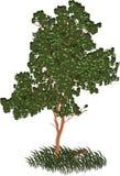 πράσινο δέντρο φύλλων ελεύθερη απεικόνιση δικαιώματος
