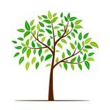 πράσινο δέντρο φύλλων Στοκ φωτογραφίες με δικαίωμα ελεύθερης χρήσης