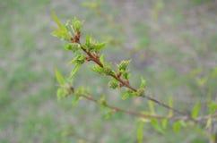 πράσινο δέντρο Στοκ Εικόνες
