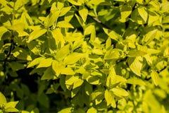 πράσινο δέντρο Στοκ Φωτογραφίες