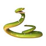 Πράσινο δέντρο Python στο λευκό Στοκ Φωτογραφία