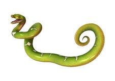 Πράσινο δέντρο Python στο λευκό Στοκ Φωτογραφίες
