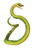 Πράσινο δέντρο Python στο λευκό Στοκ εικόνες με δικαίωμα ελεύθερης χρήσης