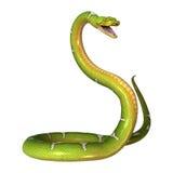 Πράσινο δέντρο Python στο λευκό Στοκ εικόνα με δικαίωμα ελεύθερης χρήσης