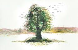 πράσινο δέντρο watercolor Στοκ φωτογραφία με δικαίωμα ελεύθερης χρήσης