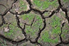 Πράσινο έδαφος ρωγμών και λίγη χλόη Στοκ Φωτογραφία