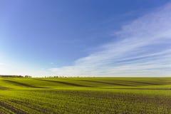 Πράσινο αγρόκτημα τομέων Στοκ φωτογραφία με δικαίωμα ελεύθερης χρήσης