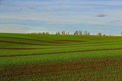 Πράσινο αγρόκτημα τομέων Στοκ Εικόνες