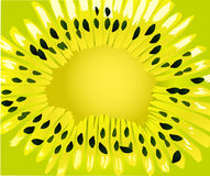 πράσινο ακτινίδιο απεικόν&i διανυσματική απεικόνιση