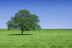 πράσινο απομονωμένο δέντρ&omicron Στοκ εικόνα με δικαίωμα ελεύθερης χρήσης
