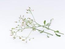 πράσινο απομονωμένο λευκό φύλλων ανασκόπησης Στοκ εικόνες με δικαίωμα ελεύθερης χρήσης