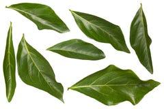 πράσινο απομονωμένο λευ&kap στοκ εικόνες