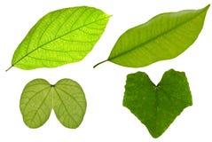 πράσινο απομονωμένο φύλλ&omicron Στοκ φωτογραφίες με δικαίωμα ελεύθερης χρήσης