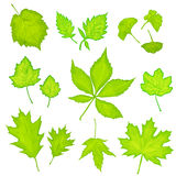 Πράσινο απομονωμένο φύλλα υπόβαθρο Στοκ εικόνες με δικαίωμα ελεύθερης χρήσης