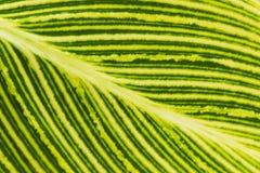 πράσινο απομονωμένο φύλλο σύνθεσης κίτρινο Στοκ εικόνα με δικαίωμα ελεύθερης χρήσης